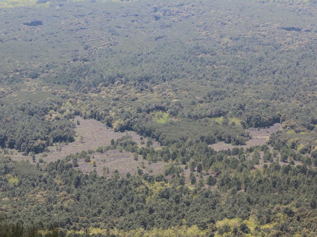 Nur noch vereinzelt sieht man die grauen Lavafelder.