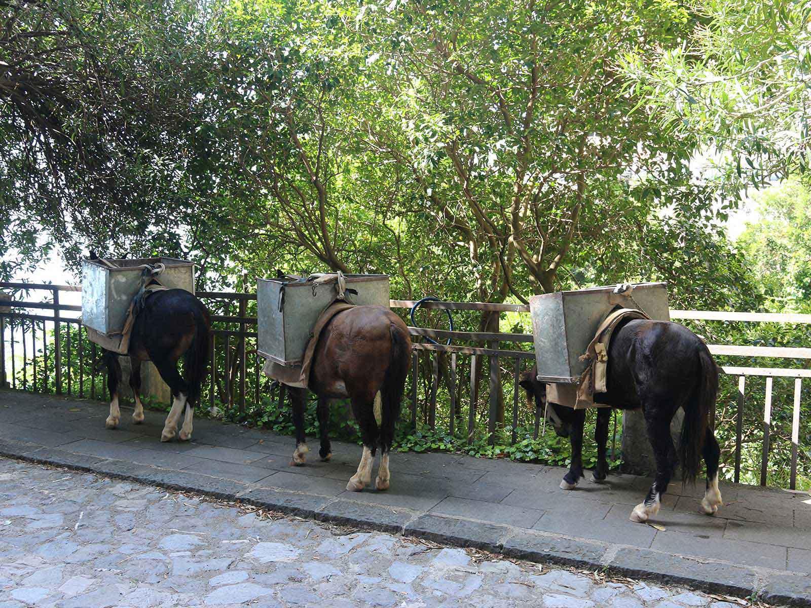Diese kleine Eselgruppe sahen wir am Vormittag am Straßenrand.